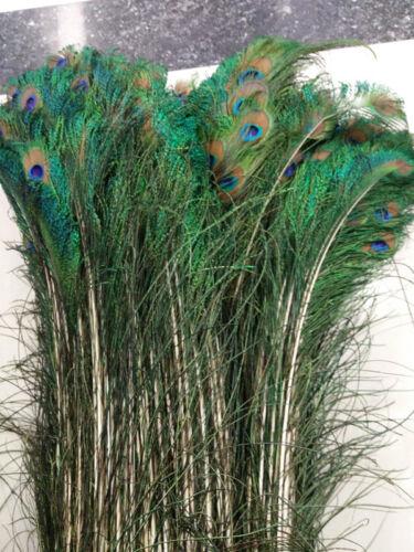 Natural Peacock Feather épée 28-32 In sur les deux parties sont symétriques en plumes