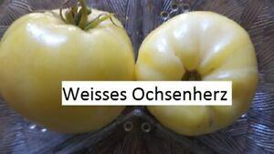 Weisses-Ochsenherz-Tomate-10-Tomaten-Samen-Ernte-2019-aus-bio-Anbau-Nr-228