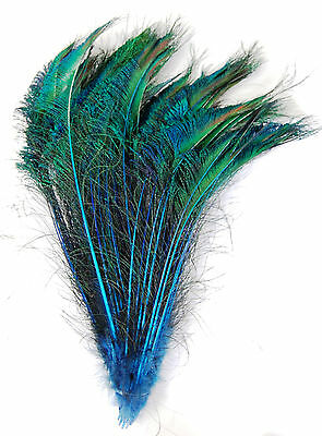 """50 Pcs DYED PEACOCK SWORDS - TURQUOISE 20-25"""" Feathers; Costume/Hats/Bridal/Pads"""