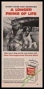 1956-ENGLISH-SPRINGER-SPANIEL-w-Hunter-Gaines-Dog-Food-Vintage-Photo-AD