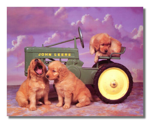 Golden Retrievers Dogs on John Deere Tractor Photo Wall Picture 8x10 Art Print