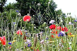 Piante da giardino con fiori con pianta da giardino con fiori