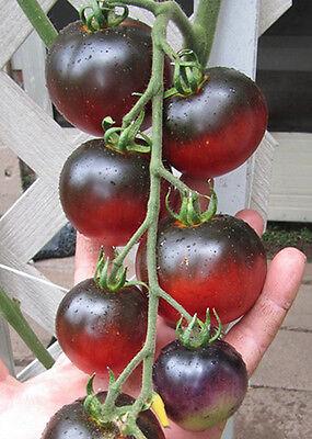 VEGETABLE TOMATO INDIGO APPLE 10 FINEST SEEDS