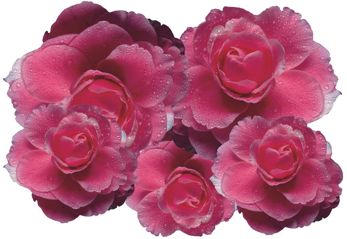 Voiture Autocollant Set Hibiskus Fleurs Autocollant Papillon Points-Flower set set set 07 0cda3f