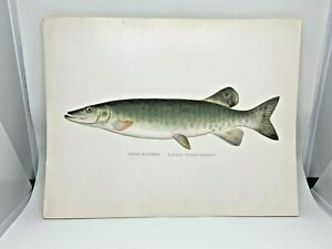 Original-Antique-Denton-Fish-Print-Muskie