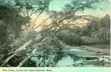 Bemidji, MN Elm Trees across the Lake 1912
