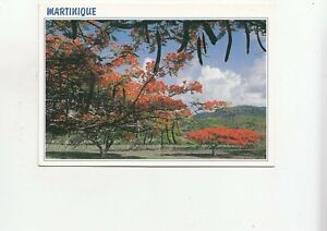 BF28169-martinique-caribbean-islands-flamboyants-sur-la-route-front-back-image