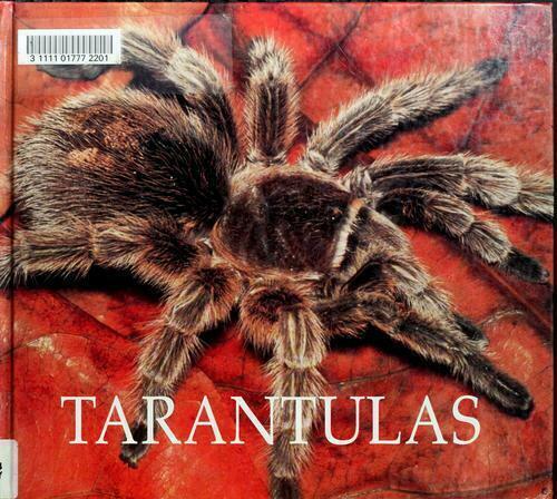Tarantulas by Murray, Peter