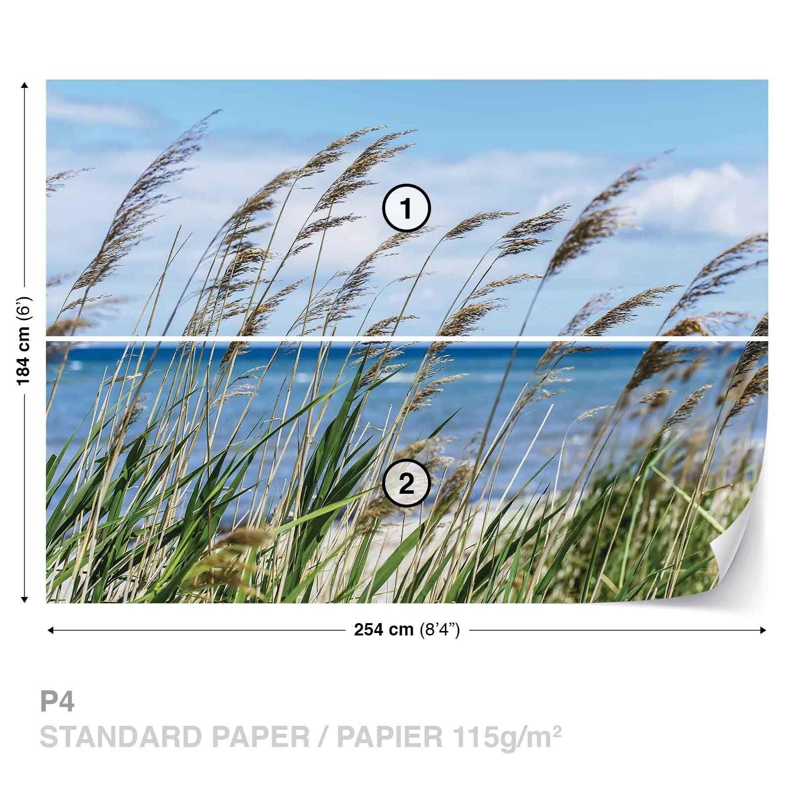 Papier Peint Papier Peint Photo Paysage Naturel Eté Plantes à la la à Plage Mer Sky 3a9620