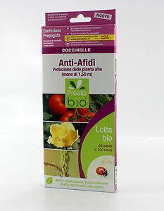Utili Lotta Insetti Confezione Afidi Biologica Coccinelle Anti C8qwZXnqz