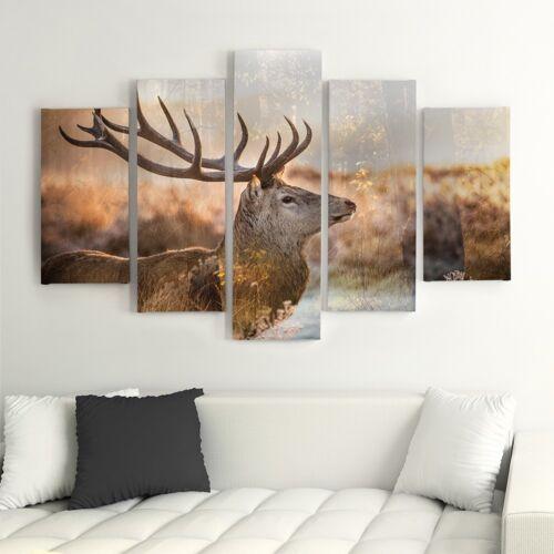 Leinwand Bild Kunstdruck Wandbilder Bilder A 150x100 Hirsch 5tlg