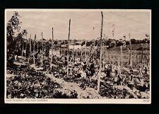 Social History HOP PICKING Hop Garden & Pickers c1920/30s? PPC