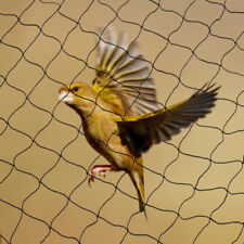 Net Netting Nylon For Bird Poultry Aviary Game Pens 2 Square Mesh Size 50x100