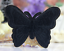 miniature 15 - Butterfly Patches Butterflies Embroidered Iron On Sew On Patch Badges Transfers