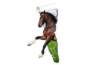 wandsticker sticker wandaufkleber f r kinderzimmer gerissene tapete pferd steigt ebay. Black Bedroom Furniture Sets. Home Design Ideas