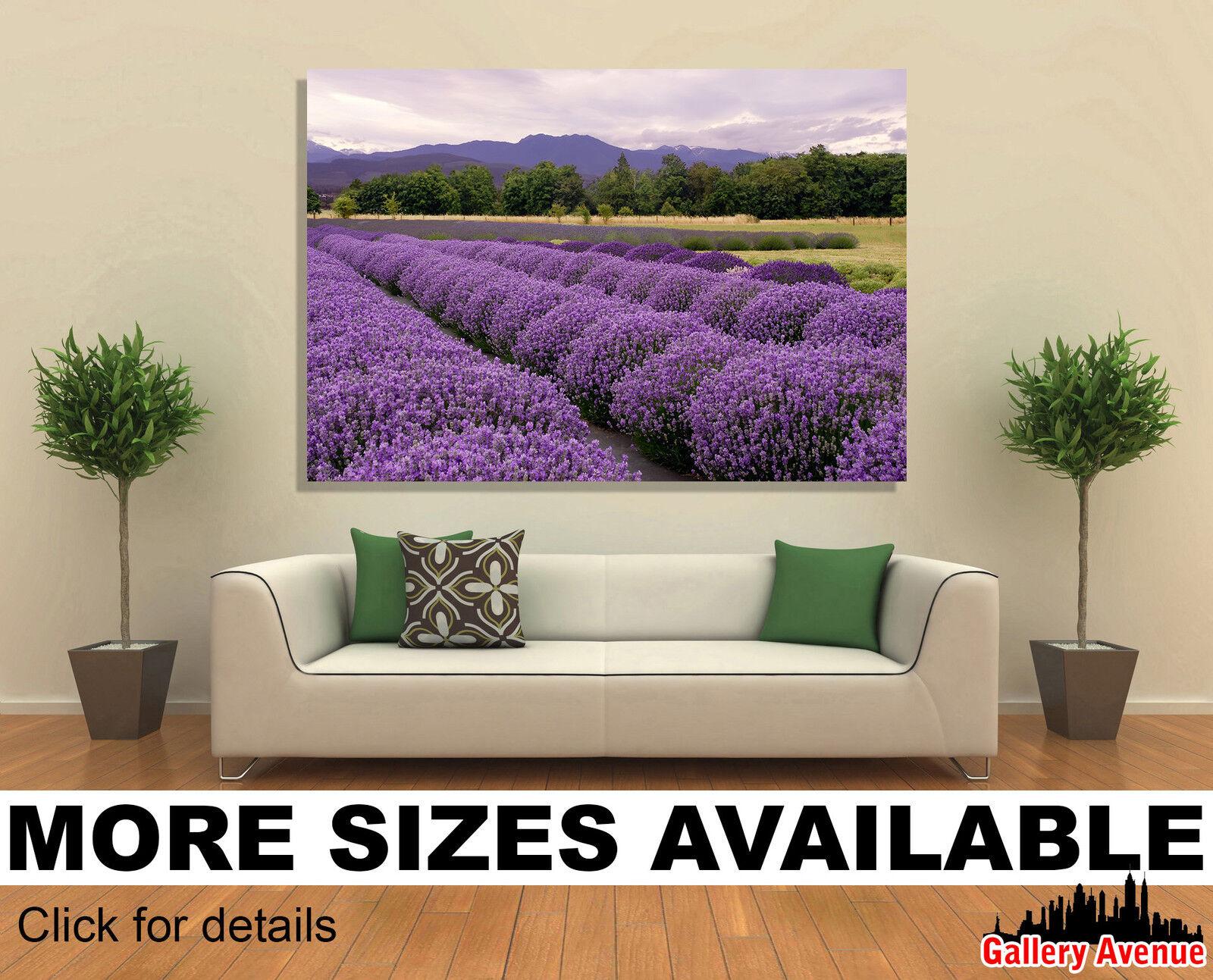 Wall Art Canvas Picture Print - lila Lavender Farm in Sequim WA 3.2