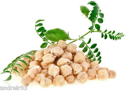 Seeds of chick Peas Turkish 50 g Горох нут турецкий Ukraine chickpeas S0191
