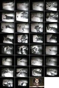 16mm-Film-Naturfilm-Tierfilm-von-1962-Leben-des-Birkwildes-Balz-R-Mostler-Film