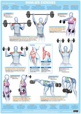 shoulder muscles weight training chart body building gym