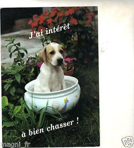 Pequeno-Perro-Tengo-Interes-de-Bien-de-la-Caza-H5392