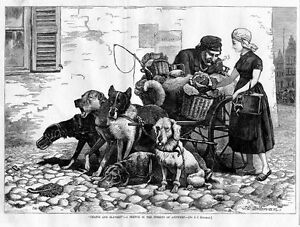 ANTWERP, CHAINS AND SLAVERY ON STREETS OF ANTWERP, DOGS
