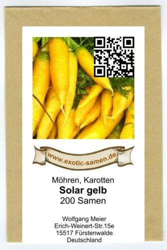 200 Samen Solar Yellow Karotte Mohrrübe Möhre