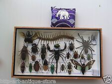 Real Rare Bug Insects Insect Display Taxidermy Box Beetle Scorpion Spider Gift