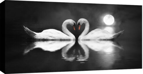 LARGE SWANS MOONLIGHT BOX CANVAS ART PICTURE BLACK /& WHITE 103x52 cm 3 cm frame