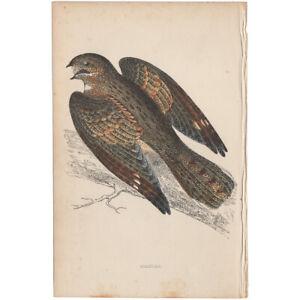 Morris-Birds-antique-1863-hand-colored-engraving-print-Pl-73-Nightjar