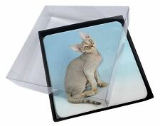 4x Devon Rex Kitten Cat Picture Table Coasters Set in Gift Box, AC-174C