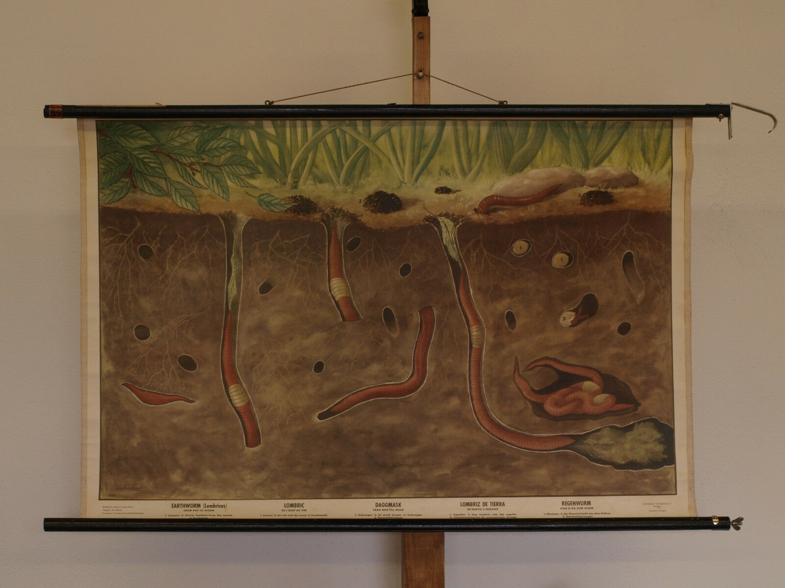 Quadro su Tela Lombrico Ringelwürmer 100x66cm 1954 Vintage School School School Earthworm 726b44