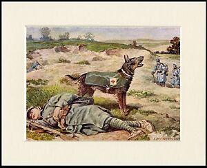GERMAN-SHEPHERD-RESCUE-WAR-DOG-LOVELY-LITTLE-DOG-PRINT-MOUNTED-READY-TO-FRAME