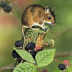 Harvest-Mouse-with-Blackberries-blank-greetings-birthday-card