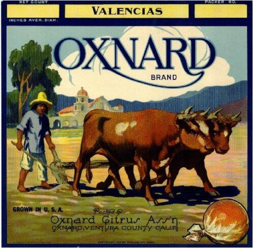 Oxnard Ox Indian Orange Crate Box Label Art Print