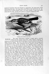 Old Antique Print Natural History 1894-95 Crow Chough-Thrush Huias Birds 19th