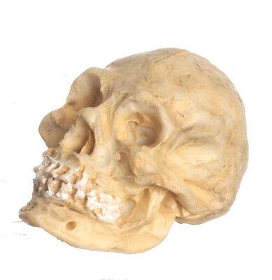 miniature maison de poupées accessoire Crâne gothique Miniature