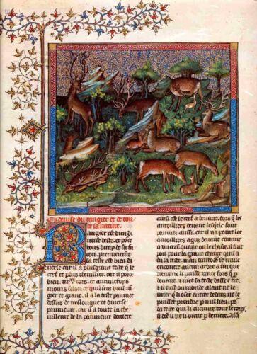 Natur Buch von der Jagd Le Livre de la Chasse Gaston Phebus 19 Ren u.s