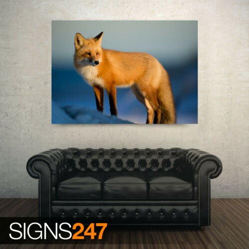 RED FOX WINTER Photo Picture Poster Print Art A0 A1 A2 A3 A4 AE914