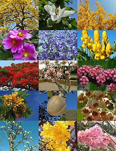 Flowering Trees Mix Rare Flower Plant Huge Desert Fragrant Bonsai