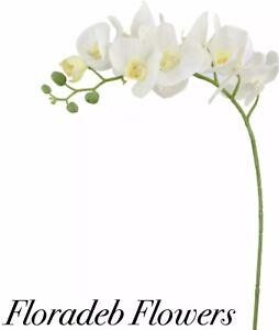 SETA-Artificiale-Fiori-Alto-105cm-Phalaenopsis-orchidea-spray-in-avorio