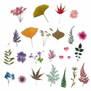 Mix-Pressed-Flower-Plant-Leaves-Specimen-Fillers-for-Epoxy-Resin-Jewelry-Making