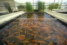 How to Raise Fish Farm CD 30 books Culture Farming Aquaculture Pond Hatcher DVD