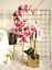 thumbnail 2 - Beautiful-Artificial-Phalaenopsis-Orchid-Flower-Bunch-of-2-White-Pink-Purple