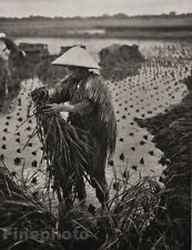 1929 JAPAN Photo Gravure RICE FARMING WORKER INDUSTRY Agriculture Zen Art GRAEFE