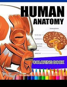 Human Anatomy Coloring Book : Anatomy & Physiology Coloring Book ...