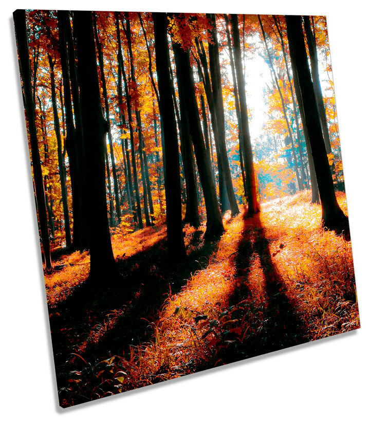 Forest Landscape Sunset SQUARE CANVAS Wand Kunst Bild Drucken
