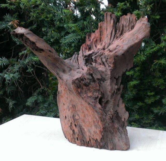 XL Mangrovenwurzel Mangrovenholz Aquarium Holz Terrarium Wurzel 42cmx34cmx24cm