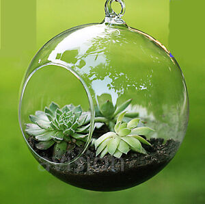 Clear-Hanging-Glass-Flowers-Plant-Vase-Stand-Holder-Terrarium-Container-Fish-Pot