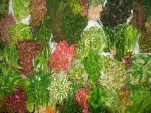 100 FISH TANK PLANTS LIVE AQUARIUM AQUATIC TROPICAL COLDWATER FRESHWATER PLANT