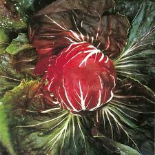 Suffolk Herbs - Chicory Palla Rossa - Organic - 250 Seeds